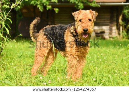 Images for dogs, Download all photos and use them even for commercial projects. #1254274357