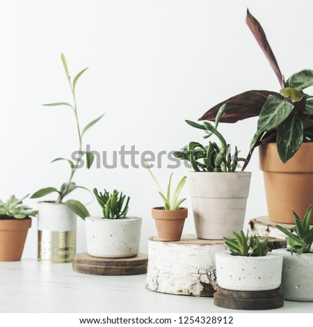 Modern composition of home garden with different plants in red clay pots on the marble shelf. Concept of copy space in design room. #1254328912
