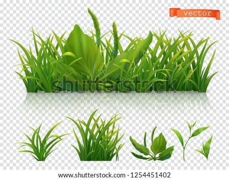 Spring. Green grass, 3d realistic vector icon set