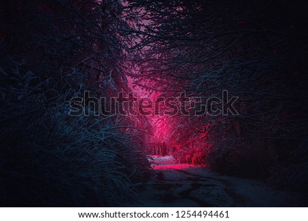 Stranger purple road. Winter landscape. Mysterious fairy forest. Background mystic atmosphere. Snowy fantastic forest. Dark fantasy wallpaper. Scary atmosphere in neon colors. Fairy forest in the fog #1254494461