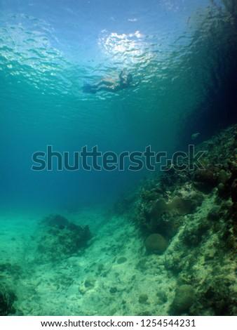 Scuba Diver underwater #1254544231