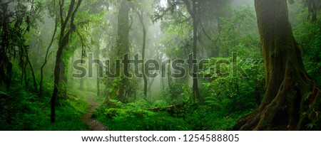 Deep tropical jungles of Southeast Asia in august #1254588805