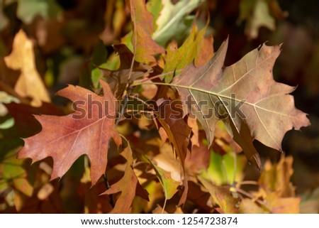 Colorful Autumn leaves #1254723874