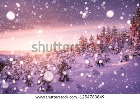 Dreamy view of the fairy-tale woodland. Location Carpathian mountain, Ukraine, Europe. Magical wintry scene on a frosty day. Alpine ski resort. Perfect winter wallpapers. Discover the beauty of earth. #1254763849