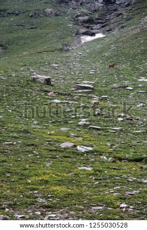Rohtang a High mountain pass in Himachal, connecting India to the north - Leh Ladhak, Spiti Valleys #1255030528