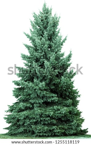 Christmas tree, isolated on white  background. Fir tree without decoration. #1255118119