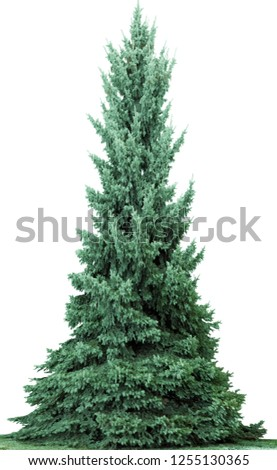Christmas tree, isolated on white  background. Fir tree without decoration. #1255130365