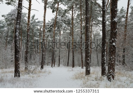 Winter forest in the snow. Trees and bushes in the snow. Snow on the branches of trees. Frosty, winter forest. #1255337311