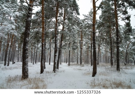 Winter forest in the snow. Trees and bushes in the snow. Snow on the branches of trees. Frosty, winter forest. #1255337326