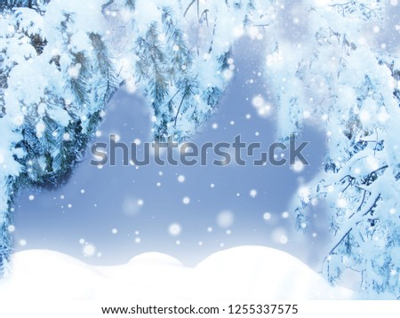 winter christmas background with snow fir branches cones frozen berries #1255337575