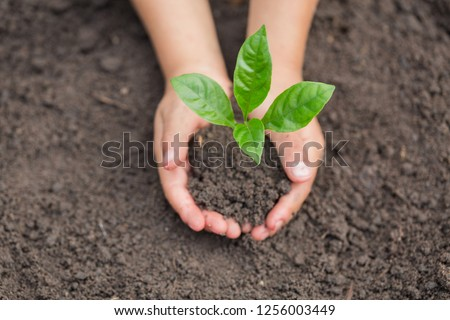 Child hands holding and caring a young green plant, Seedlings are growing from abundant soil, planting tree, reduce global warming,  growing a tree, love nature, World Environment Day #1256003449