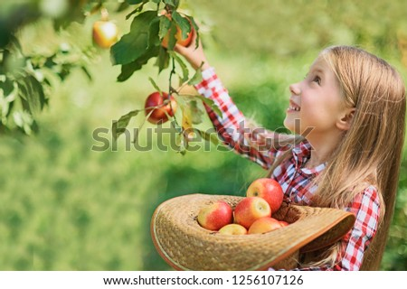 Girl with Apple in the Apple Orchard. Beautiful Girl Eating Organic Apple in the Orchard. Harvest Concept. Garden, Toddler eating fruits at fall harvest. Apple picking. #1256107126