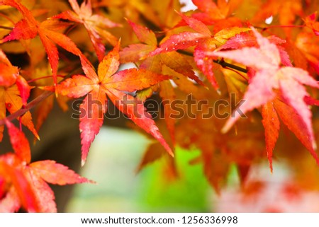 The colorful autumn leaves, Kyoto, Japan #1256336998