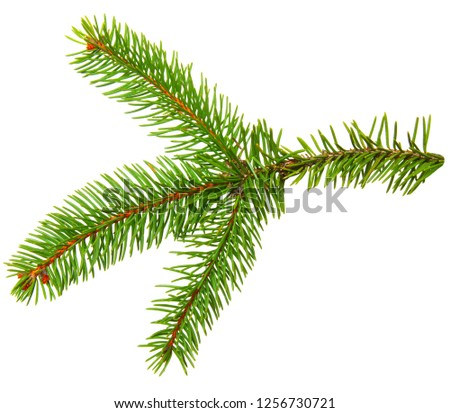 Fir branch isolated on white background #1256730721