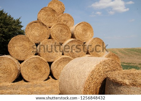 straw bales stacked on the field #1256848432