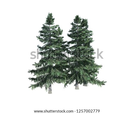 Alaska Cedar tree on white background, 3D illustration, 3D rendering #1257002779