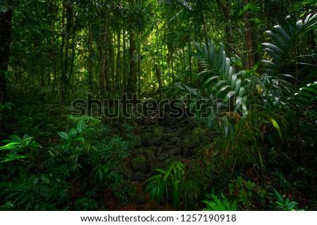 Asian tropical rainforest #1257190918