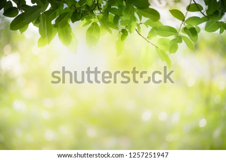 Closeup nature view of green leaf on blurred greenery background in garden with copy space using as background natural green plants landscape, ecology, fresh wallpaper concept. #1257251947