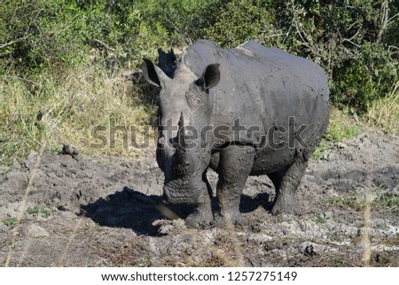 Saw this White Rhinoceros whilst on a visit to the famous Kruger National Park in South Africa. #1257275149