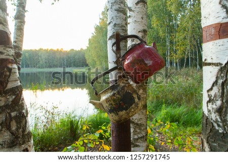 tourist parking in the forest #1257291745