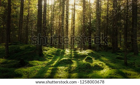 Magical fairytale forest. Coniferous forest covered of green moss. Mystic atmosphere. #1258003678