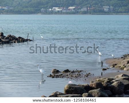 bird at riverside #1258106461
