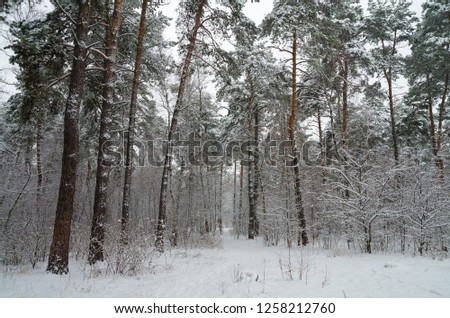 Winter forest in the snow. Trees and bushes in the snow. Snow on the branches of trees. Frosty, winter forest. #1258212760