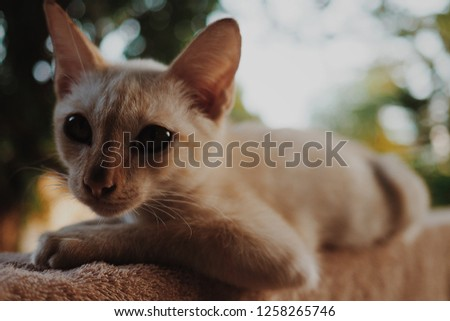 Cute little cat #1258265746