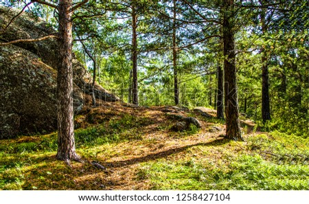 Forest trees background. Forest trees scene. Forest trees view. Forest trees landscape #1258427104
