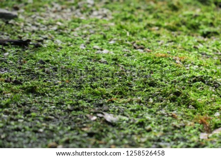 Nature backgrounds of moss on the ground in the garden.  #1258526458