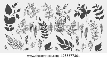 Set of leaves. Hand drawn decorative elements. Vector illustration Royalty-Free Stock Photo #1258677361