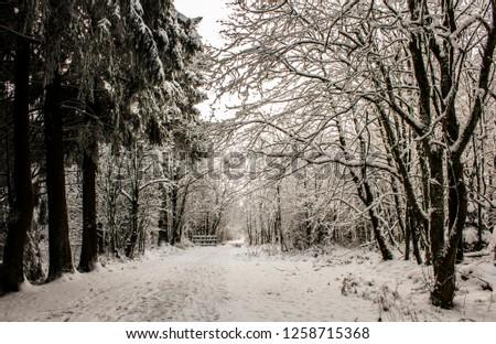 Snow landscape from Ardennes, Belgium #1258715368