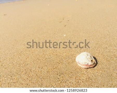 Shellfish on the sand #1258926823