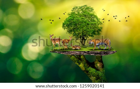 Concept Nature reserve conserve Wildlife reserve tiger Deer Global warming Food Loaf Ecology Human hands protecting the wild and wild animals tigers deer, trees in the hands green background Sun light #1259020141