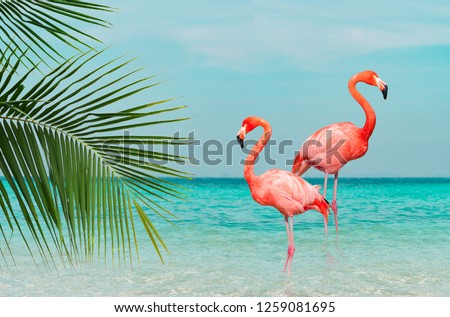 Vintage and retro collage photo of  flamingos standing in clear blue sea with sunny sky with cloud and green coconut tree leaves in foreground. #1259081695