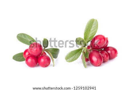 Fresh hand-picked forest Cowberry isolated on white background #1259102941
