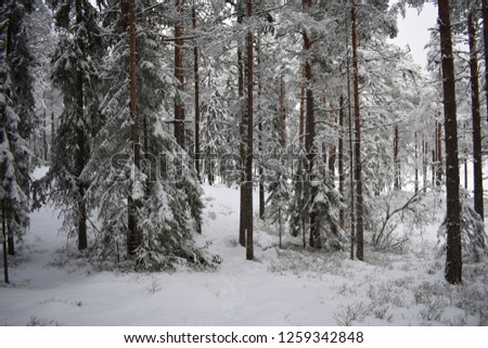 Snowy and winter view from inside the deep forest - bright natural colored nature landscape - beautiful - Kongsvinger, Norway #1259342848