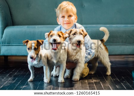 Happy smiling blond child school boy hugging three funny jack russel terrier dog sits on the floor at home over turquoise sofa on background. Happy family and friendship conept. #1260165415