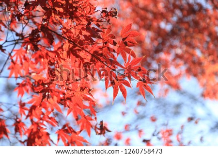 Korea's autume colorful foliage #1260758473