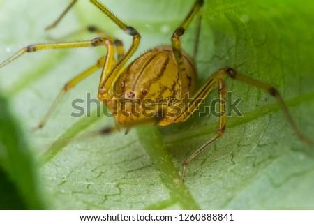 closeup shot of spider in nature #1260888841