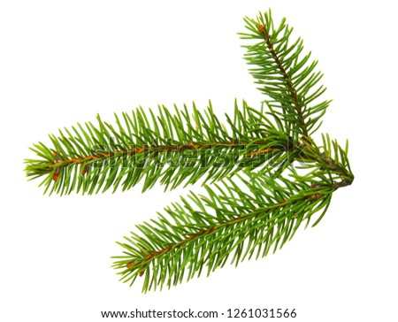 Fir branch isolated on white background #1261031566