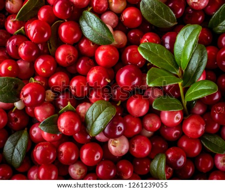 Background of Vaccinium vitis-idaea (lingonberry, partridgeberry or cowberry) Natural food of wild nature, rich in vitamins. Non GMO. Top view. Northern Europe, America and Russia. #1261239055
