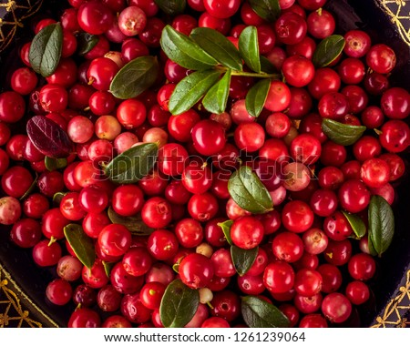 Background of Vaccinium vitis-idaea (lingonberry, partridgeberry or cowberry) Natural food of wild nature, rich in vitamins. Non GMO. Top view. Northern Europe, America and Russia. #1261239064