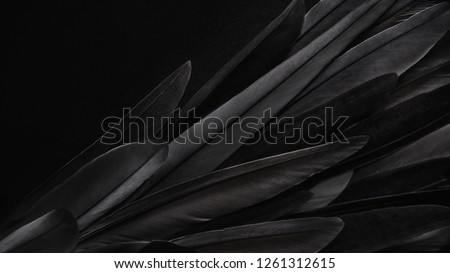 Black wing feathers detail, abstract dark background #1261312615