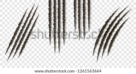 Fancy claws scratches - vector isolated. Talons cuts animal cat, dog, tiger, lion #1261563664