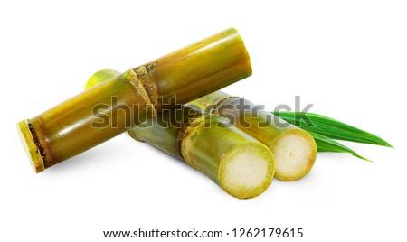 Sugar cane isolated on white background  Royalty-Free Stock Photo #1262179615