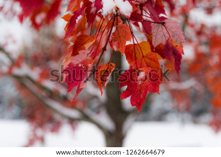 Autumn laves in winter #1262664679