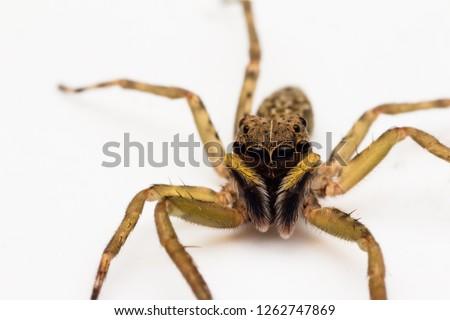 closeup shot of jumping spider #1262747869