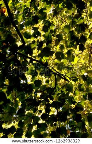 tree foliage colour and light contrast #1262936329