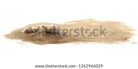 Seashells in sand pile isolated on white background #1262966029
